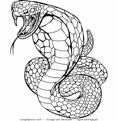 Snake Viper Drawing Coloring Pages Getdrawings