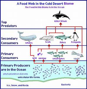 food chain for desert