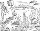 Coloring Fish Underwater Adult Vector Only Istock sketch template