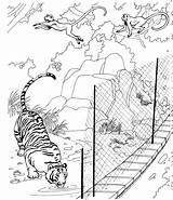 Coloring Tiger Pages Zoo Animals Wildlife Printable sketch template