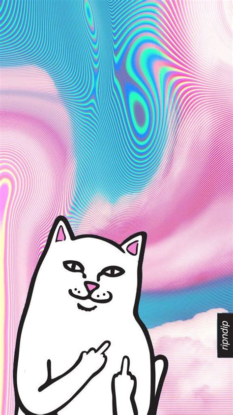 rip  dip white cat wmiddle finger wallpaper