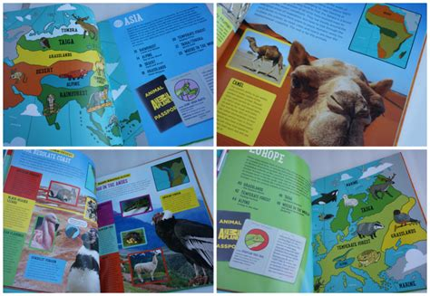 animal planet books  kids  animal fun fact cards