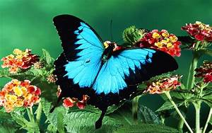 Colorful Butterfly Wallpapers 10 Background Wallpaper ...