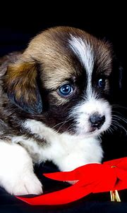 Download 1080x1920 wallpaper cute puppy, adorable, animal ...