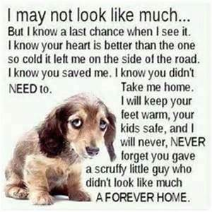 Cute Dog Quotes and Sayings - Funny Daily Quotes