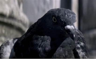 Double Bond James Take Gifs Pigeon Moonraker