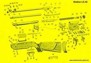 Walther Modell 55 : walther lg55 ersatzteile exportfeder druckfeder kolbenfeder knicklaufluftgewehr kaliber 4 5mm 5 ~ Eleganceandgraceweddings.com Haus und Dekorationen