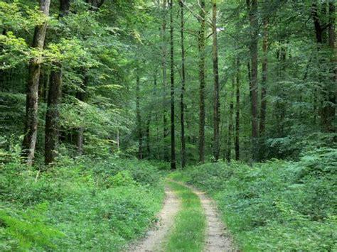chambres d hotes dans les landes forêt de bercé 6 images de qualité en haute définition