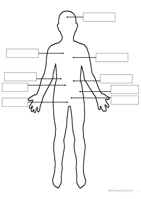 The Human Body Worksheet  Free Esl Printable Worksheets Made By Teachers