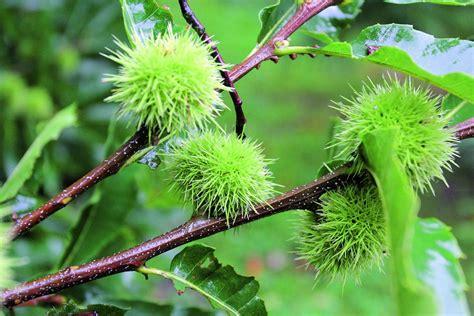 Rucavas dendrārijā labi iejutušies augi no visiem kontinentiem. Skaistāko retumu izlase mūsu ...