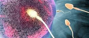 Preventing Sperm's 'Power Kick' Could Be Key To Unisex ...