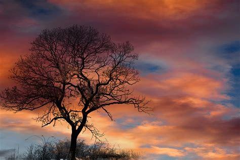 dramatic sky clouds tree  photo  pixabay