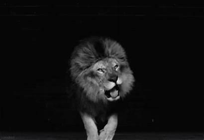 Sexe Sauvage Wild Testez Ou Lion Giphy