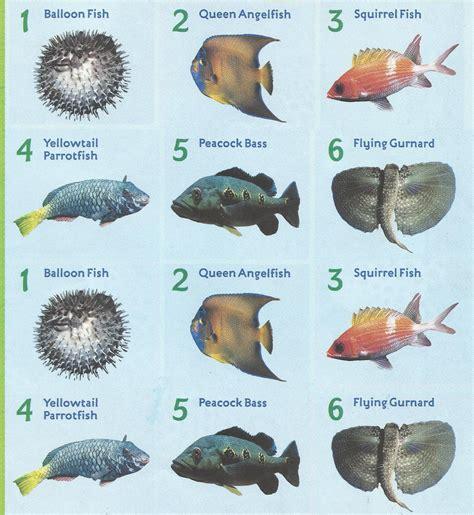 freshwater aquarium fish  names  fish tank