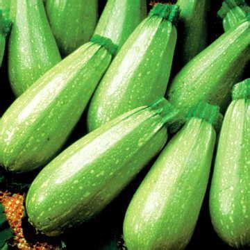 Light Green Squash by Magda Hybrid Squash Seeds
