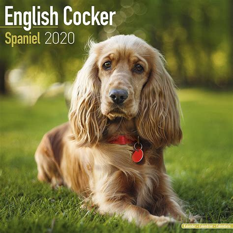 english cocker spaniel calendar pet prints