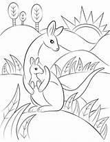 Kangaroo Coloring Pages Printable sketch template
