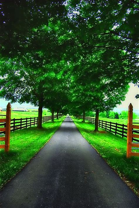 A Tree Lined Drive Way Surrounded By Rolling Green