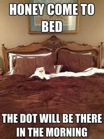 Animal In Bed Meme - being a newfie am all this busted me up meme guy