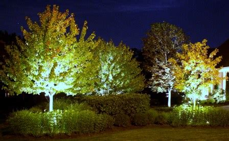 instead of lights uplight the trees fdagroupproject