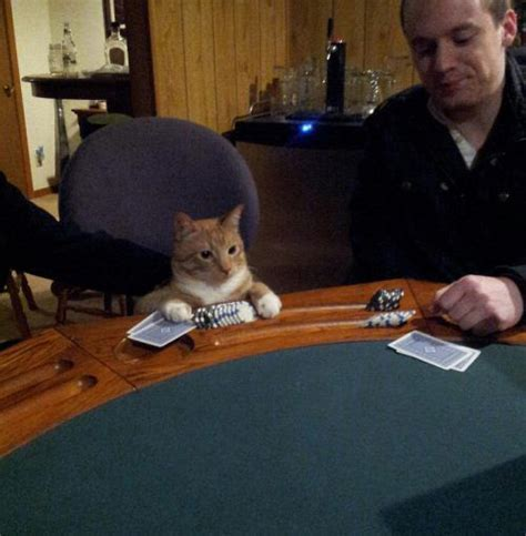 Cat Playing Poker   Funny Cat Pictures