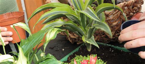 Pflanzen Im Kinderzimmer by Gesund Wohnen Mit Pflanzen Im Kinderzimmer