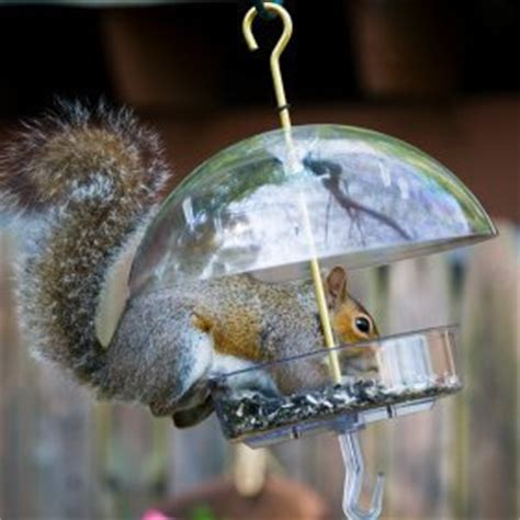 how to keep squirrels out of bird feeders keeping squirrels out of your bird feeder thriftyfun