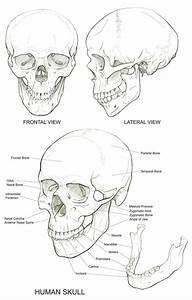 Skull Reference  U2026