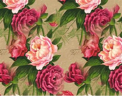 Roses Antique Rose Background Desktop Backgrounds Wallpapers