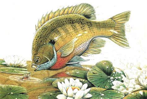 fishing fish sport water fishes bluegill artwork painting