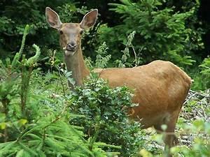 Bilder Vom Wald : das netz des lebens im wald koleo umwelt und naturschutz f r kinder in hessen ~ Yasmunasinghe.com Haus und Dekorationen