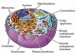 Multiple Choice Questions On Cell And Cell Organelles