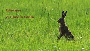 Zu Hause Zuhause : buchvorstellung edemissen zu hause im gr nen alvesse das dorf mit dem wappenbaum ~ Markanthonyermac.com Haus und Dekorationen
