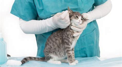 besuch beim tierarzt mit deiner katze darauf solltest du