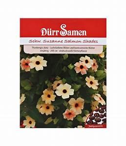 Schwarzäugige Susanne Kaufen : d rr samen schwarz ugige susanne 39 salmon shades 39 dehner ~ Lizthompson.info Haus und Dekorationen
