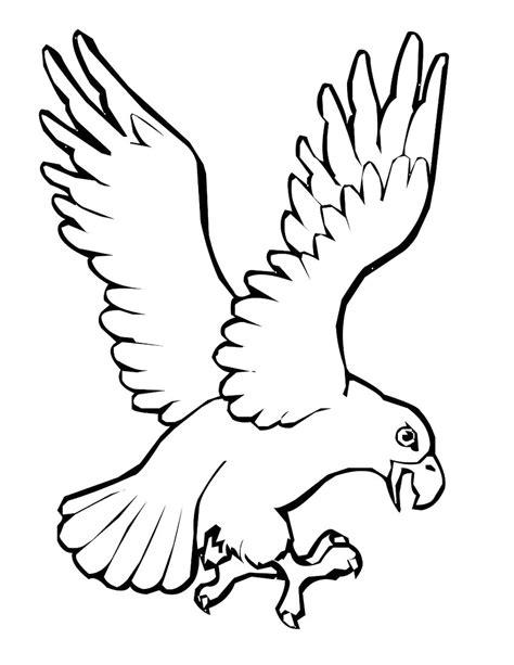 70 gambar burung elang untuk mewarnai terbaru