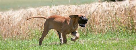 durchfall beim hund ursachen fuetterungstipps naturavetal