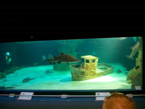 reportage sur l aquarium du croisic