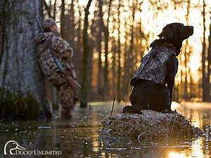 Ducks Unlimited Wallpaper - WallpaperSafari