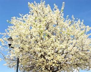 Rosa Blühender Baum Im Frühling : bl hender baum im fr hling auf die l ndliche wiese ~ Lizthompson.info Haus und Dekorationen