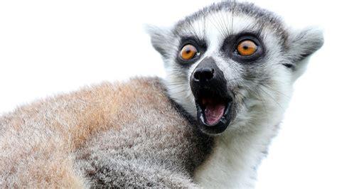 exotic animals dozens  animals stolen