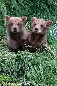 17 Best images about Bear Cubs on Pinterest | Baby polar ...