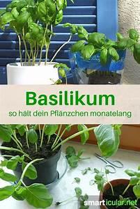 194 best images about garten balkon pflanzen on pinterest With französischer balkon mit design gärten für kleine budgets