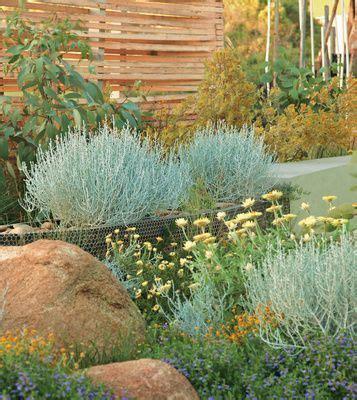 australian coastal garden design 1415 best australian native gardens images on pinterest australian garden design australian