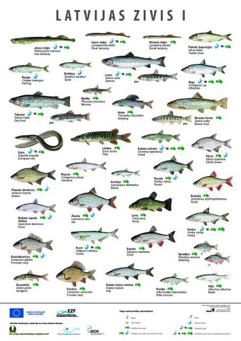 Izdoti jauni Latvijas ūdeņos sastopamo zivju sugu plakāti ...