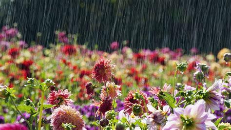rain hd wallpaper background image  id