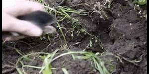 Halten Maulwürfe Winterschlaf : maulwurf gefunden kleintierhilfe exotenasyl ~ Lizthompson.info Haus und Dekorationen