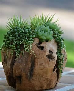 Tronc Bois Flotté : decoration d co bois flott tronc arbre plantes succulentes d co bois flott plantes ~ Dallasstarsshop.com Idées de Décoration