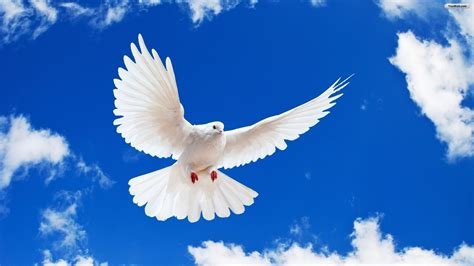 Where Is Peace In Our Turbulent World?