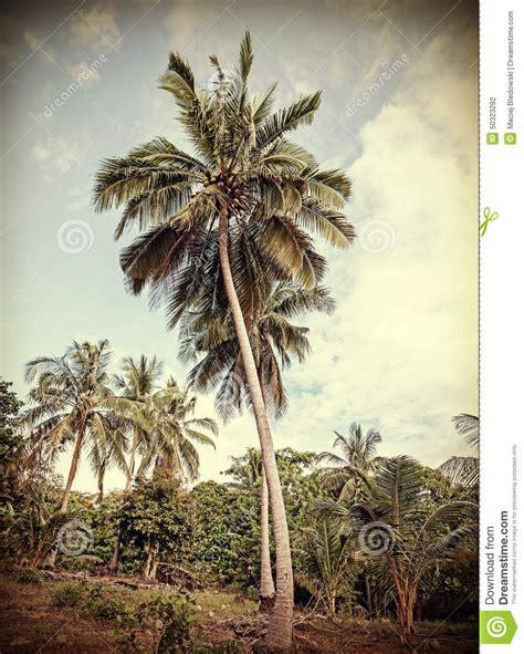 coconut island nostalgic palm trees at tropical coast vintage toned royalty free